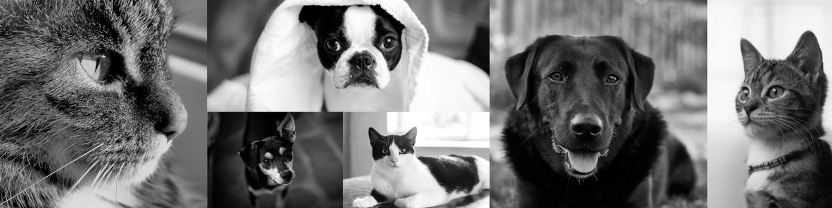 Dogs & Cats Banner