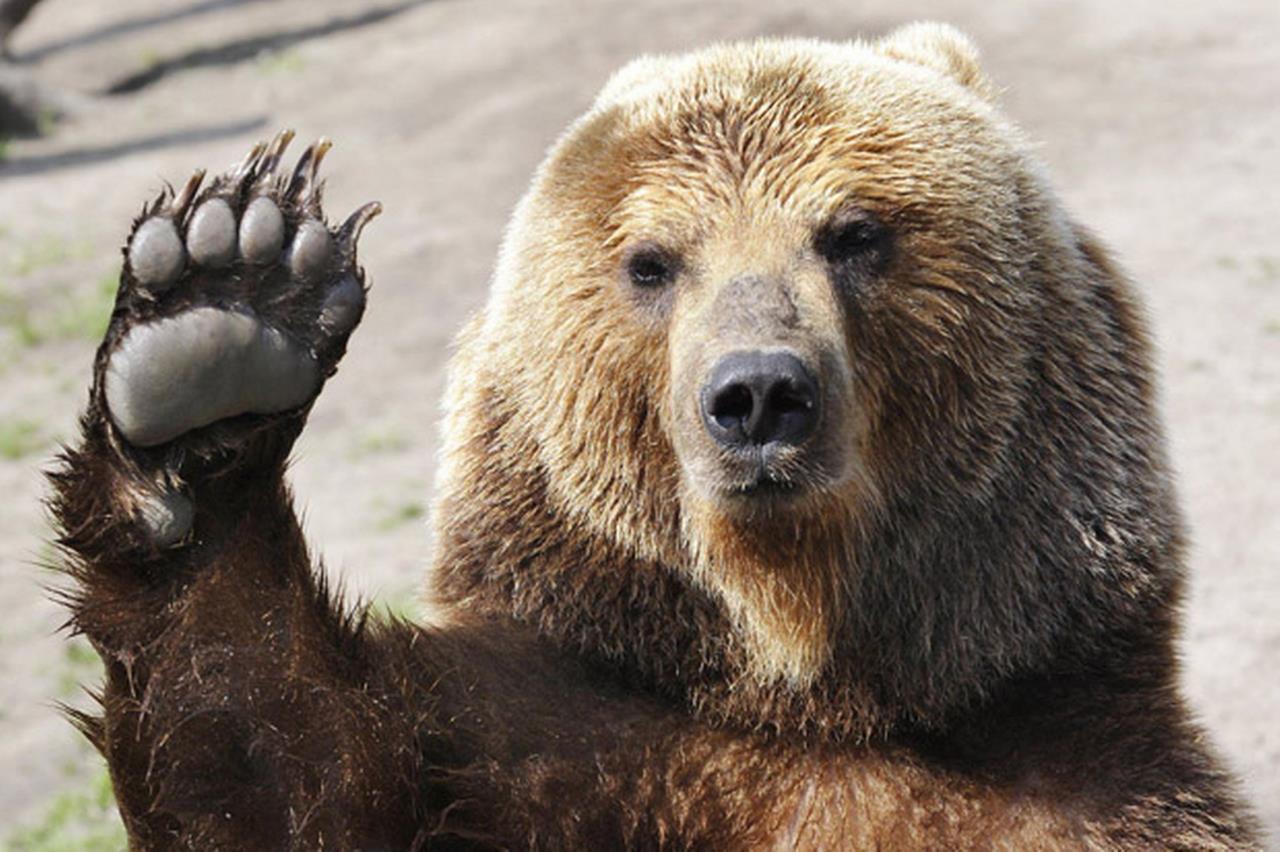 Bear Image 3 Bear Image